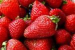 شكل الأطعمة يتناسب مع العضو المستفيد منها في الجسد
