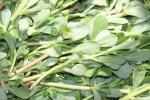 الوصفة السحرية نبات يقتل السرطان وبقضي نهائياً على الكوليسترول