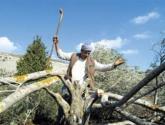 مستوطنون يقطعون أشجارا للمواطنين جنوب الخليل