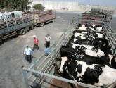 وزارة الزراعة: أسعار اللحوم ستنخفض في الأيام القليلة القادمة