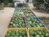 ضبط 72 مخال بطيخ من منتجات المستوطنات في نابلس