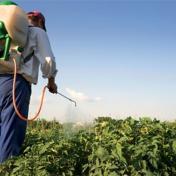 الخبير البيئي أبو قرع يحذر من خطر مبيدات منتشرة في فلسطين