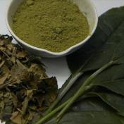 هيئة أوروبية: مكملات الشاي الأخضر تضر بصحة الكبد