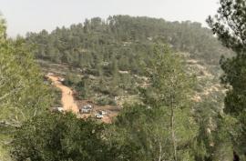 أحراش جيبيا مهددة بالمصادرة