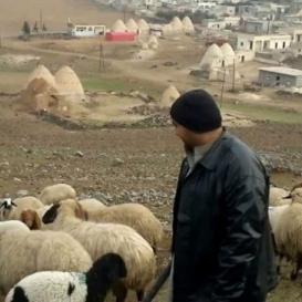 الاحتلال يحارب رعاة الأغنام بمصدر رزقهم في النقب