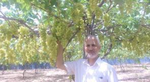 """خاص لـ""""وطن"""": بالفيديو..  مزارعو غزة يضاعفون انتاج العنب ..لكن أين السوق؟"""