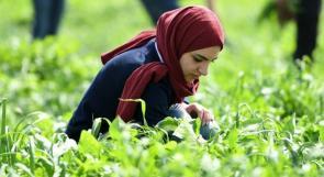 """""""بلدي اطيب"""" تنظم جولة في منطقة جنين .. للتعريف بالمنتج الزراعي المحلي"""