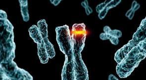 علاج جيني للبدانة والشيخوخة