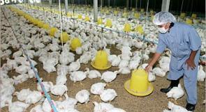 كوريا الجنوبية ترصد تفشيًا جديدًا لمرض أنفلونزا الطيور