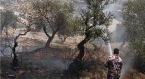 حريق يلتهم مساحات شاسعة من حقول الزيتون والأشجار غرب رام الله