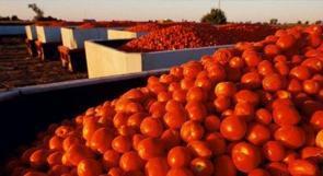 """هآرتس: جنون أسعار الخضراوات يصل """"إسرائيل"""".. كيلو البندورة بـ 13 شيقل ، والبصل 25 شيقل"""