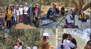 اتحاد الجان العمل النسائي ينظم حملة تطوعيه لقطف الزيتون في محافظة طولكرم