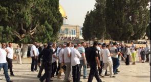 237 مستوطنًا وقائد شرطة الاحتلال يقتحمون الأقصى