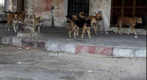 """آلاف الكلاب الضَالة تُفزع رفح """"الحدودية"""" والبلدية حَائرة"""
