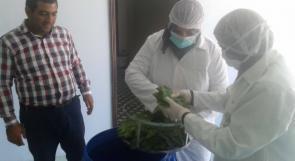 """اول مصنع في فلسطين لتخليل وتغليف ورق العنب في اكياس """"الفاكيوم"""""""