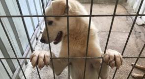 """خاص لـ""""وطن"""" بالفيديو .. للمساهمة بحل مشكلة الكلاب الضالة .. كندا تتبنى ١٥ كلباً من بيت لحم"""