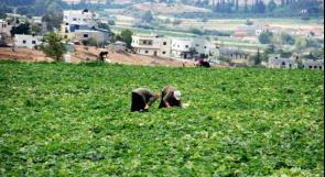 خبير: مبيدات زراعية محظورة تستعمل في فلسطين