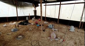 مزارعو الدواجن في غزة يناشدون عبر وطن لتعويض خسائرهم من آثار عدوان الاحتلال عام 2014