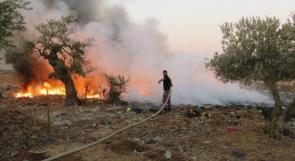 جنين: إحتراق 50 شجرة زيتون جنوب جنين