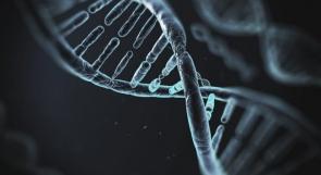 اكتشاف شكل جديد من الحمض النووي داخل خلايا بشرية