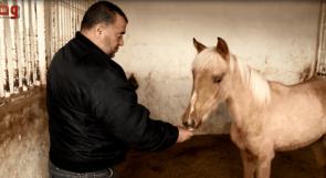 التلحمي أبو غربية يعيد المجد للخيول العربية