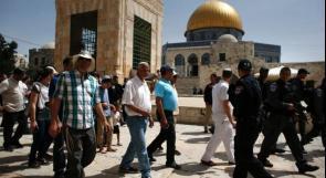 144مستوطنا يقتحمون المسجد الأقصى