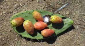 فاكهة الصّبر