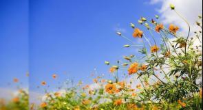 الطقس: درجات الحرارة أعلى من معدلها السنوي