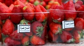 """""""إسرائيل"""" تمنع الفراولة المورّدة من قطاع غزة"""
