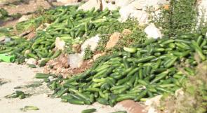 مزارعون يشتكون: ثمار متكدسة وأسعار متدنية