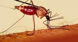 القضاء على الملاريا أمر ممكن!!