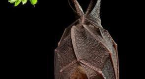 """""""الصحة العالمية"""" تحذر من انتقال أمراض جديدة من الحيوانات للبشر"""