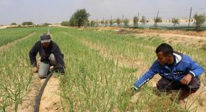 """خاص لـ """"وطن"""" بالفيديو .. غزة : البطالة تحيي الأراضي البور في قرية """"أم النصر"""""""