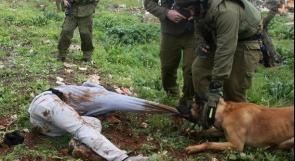 جنود الاحتلال ينكلون بشابين مصابين من أبو ديس قبل اعتقالهما