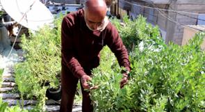 ستيني يحول سطح منزله في غزة إلى حديقة للخضروات العضوية