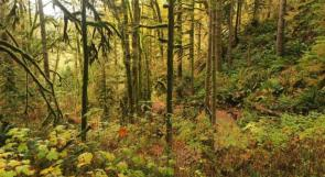ماذا يحدث لو اختفت غابات الأمازون المطيرة؟