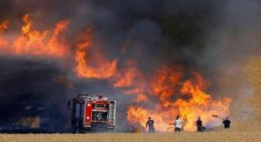 خسائر ثقيلة وإهمال واضح...حرائق الأعشاب: 125 حادثًا يوميًا ونداء استغاثة كل 4 دقائق