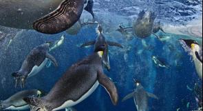 شاهد.. أفضل صور للحياة البرية في العالم