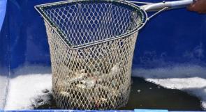 """خاص لـ""""وطن"""": بالفيديو.. """"تربية الأسماك"""" في قلقيلية.. تجربة تأمل العودة"""