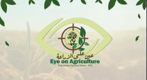 """إتحاد جمعيات المزارعين يطلق برنامج """" عين على الزراعة """" لطرح قضايا المزارعين ورفع صوتهم الى مراكز صنع القرار"""
