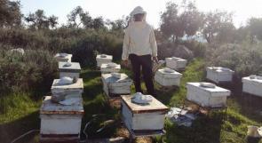 """خاص لـ """"وطن"""": بالفيديو.. الخليل: تربية النحل في الشتاء.. استثمار وغذاء"""