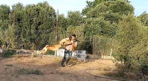 أول مدرسة لتدريب الكلاب في غزة