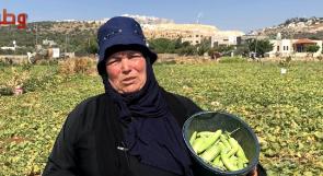 كورونا تلحق خسائر كبيرة بموسم الفقوس في دير بلوط.. والمزارعات يروين معاناتهن عبر وطن