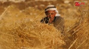 تجاوز عمره المئة عام.. المسن الشعراوي يفلح أرضه منذ تسعة عقود ويربي أبناءه على حبها
