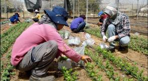 """""""معاريف"""": ارتفاع عدد العمالة الأجنبية يهدد الإقتصاد الإسرائيلي"""