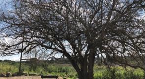 حيث ولد حنظلة.. قرية الشجرة بعد 70 عاما من النكبة!