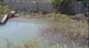 """خاص لـ """"وطن"""": بالفيديو..80% نسبة ملوحة مياه رفح وتخوفات من ارتفاعها بسبب القناة المائية المصرية"""