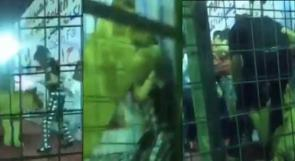 بالفيديو.. أسد يهاجم طفلة في السعودية