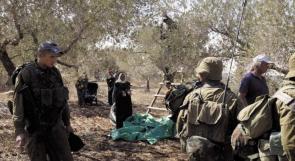 الاحتلال يطرد قاطفي الزيتون من أراضيهم في قريوت جنوب نابلس