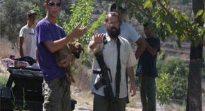 مستوطنون يسرقون أشتال زيتون من بلدة الخضر